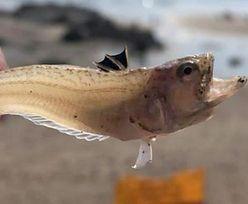 Mała rybka zabiła 16-latka. Straszna śmierć podczas wakacji w Europie