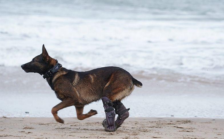 Ten pies zasłużył na Medal Honoru. Dostał coś cenniejszego - drugie życie