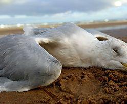 Niepokojące odkrycie na plaży w Sopocie. Mieszkańcy przerażeni
