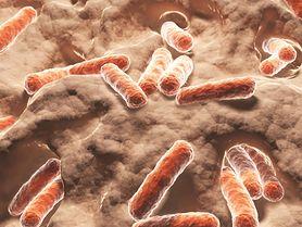 Bakterie probiotyczne zwalczają stres!
