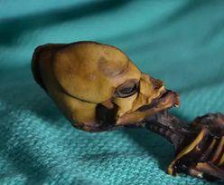 Tajemniczy szkielet z Chile. Naukowcy rozwiązali jego zagadkę po 18 latach