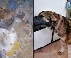 Pies przymarzł do ziemi. Niesamowita akcja ratunkowa