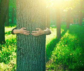 Zdrowie kryjące się w drzewach
