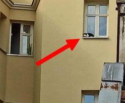 Nie miał szans. Internauci oburzeni tym, co się stało we Wrocławiu