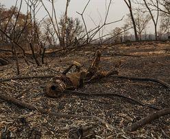 Płoną nawet mokradła. Coraz bardziej niepokojące informacje z Brazylii