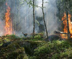 Chmura po pożarze w Czarnobylu. Sprawdzamy, czy mamy się czego obawiać