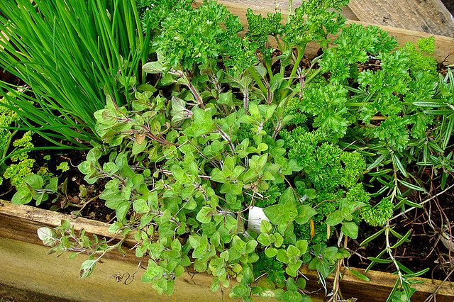 Zioła – podstawa domowego ogródka