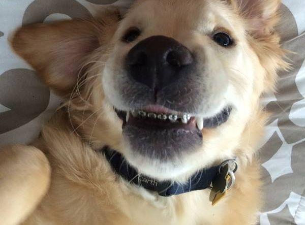 Ten pies nosi aparat ortodontyczny. Poznajcie Wesleya