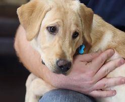 USA. Para wydała 47 tysięcy dolarów na sklonowanie ukochanego psa