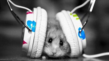 Wpływ typu słuchawek na odbiór muzyki