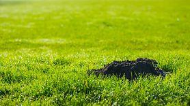 Sposoby na pozbycie się kreta z ogrodu (WIDEO)