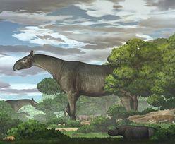 Ważył tyle, co cztery słonie. Odkrycie w Chinach. Największy ssak w historii Ziemi