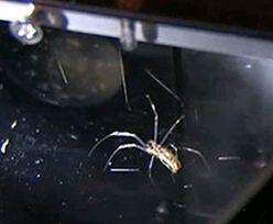 Eksperyment NASA. Naukowcy wysłali w kosmos pająka. Zobacz, co zrobił