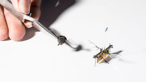 Najmniejszy inteligentny dron i samodzielna robomucha: to lata jużdzisiaj
