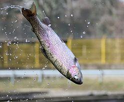 Przerażające, na co dziś biorą ryby. To efekt działań człowieka