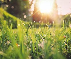 Kiedy początek wiosny w Polsce? Ważna data w kalendarzu