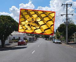 Niezwykłe odkrycie w Australii. Znaleźli prawdziwy skarb