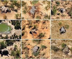 300 martwych słoni. Znaleźli przyczynę