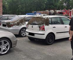 Strażacy z Kędzierzyna-Koźle nieźle się zdziwili. Pokazali zdjęcia z parkingu