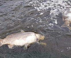 Katastrofa ekologiczna w Rybniku. Wędkarze zrozpaczeni