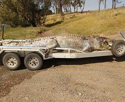 Zastrzelił legendę Australii. 100-letni krokodyl miał pożerać krowy