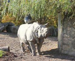 Co robić, siedząc w domu? Polskie ogrody zoologiczne zapraszają na wirtualne odwiedziny