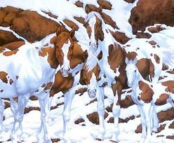 Ile koni widzisz na zdjęciu? Tylko 6 proc. osób podaje poprawną odpowiedź