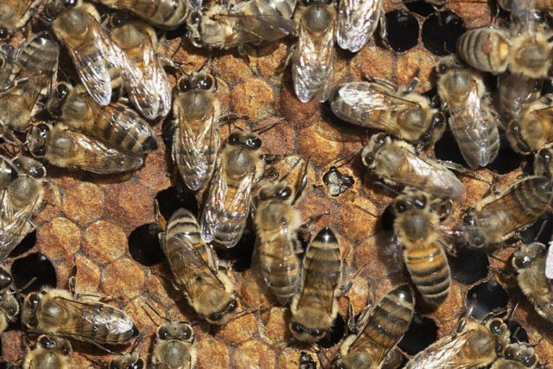Zabito setki pszczół. Sprawcy zniszczyli ule oblewając je ropą