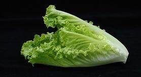 Sałata rzymska – wygląd, właściwości, uprawa i zastosowanie w kuchni
