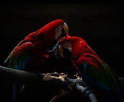 Martwe zwierzęta w sklepie zoologicznym. Szokujące odkrycie w Nowym Sączu