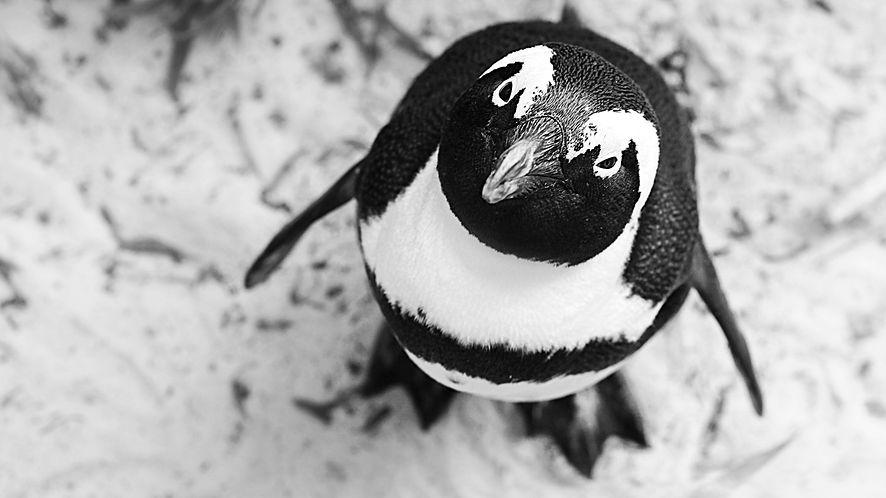 Linux 5.6 wydany: WireGuard VPN wreszcie w mainline, wstępne wsparcie USB4