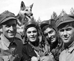 Zwierzęta w polskich filmach i serialach. Ile wiesz o kultowych czworonogach i nie tylko?