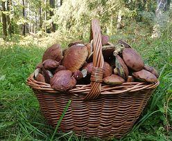 Sezon w pełni? Ludzie wynoszą z lasów pełne kosze grzybów