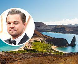 Leonardo DiCaprio nie żałuje pieniędzy. Wyda 43 mln dolarów