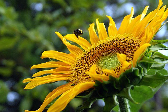 Pyłki atakują