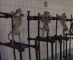 Barbarzyńskie testy w niemieckim laboratorium. Kara... 300 euro