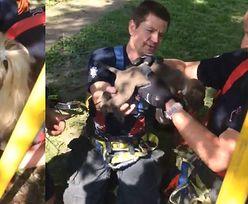 Szczeniak utknął 6 metrów pod ziemią. Strażacy ruszyli z pomocą