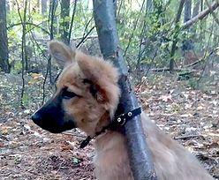 Przywiązał szczeniaka do drzewa. Internauci pomogli znaleźć zwyrodnialca
