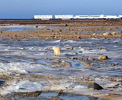 Eksperci ostrzegają: Ziemia ma czas tylko do 2030 roku, aby powstrzymać katastrofalne zmiany klimatu