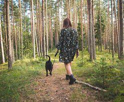 W co się wyposażyć, planując przechadzki z psem po lesie?