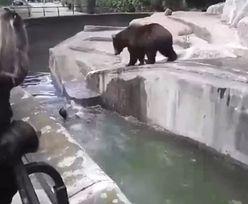 Wtargnął na wybieg w zoo i zaczął bić niedźwiedzia. Nagranie z Warszawy