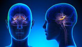 Hipokamp - położenie, funkcje, przyczyny i skutki uszkodzenia, leczenie