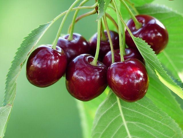 Naturalne pigmenty w żywności