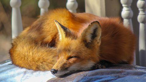 Firefox już prawie naprawiony. Pokazujemy jak zainstalować łatkę