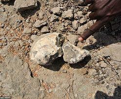 Przodek człowieka sprzed 4 mln lat. Zobacz odtworzoną twarz