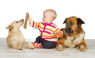 Duże psy towarzyszami dzieci