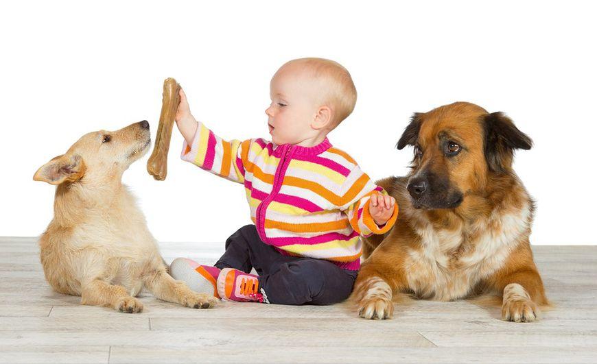 Niemowlę z dużymi psami