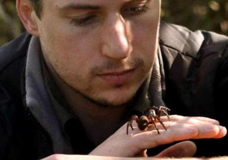 Odkrycie w Australii. Poznano nowy gatunek niebezpiecznego pająka
