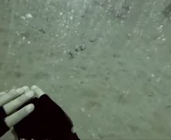 """Dno oceanu """"jak szampan"""". Nurkowie nagrali niezwykłe zjawisko"""