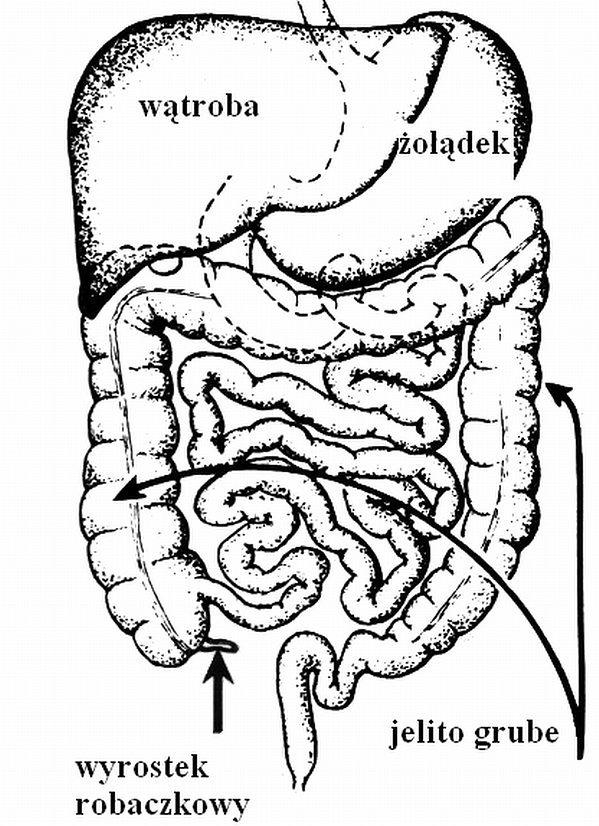 Choroby układu pokarmowego - świadomość chorób